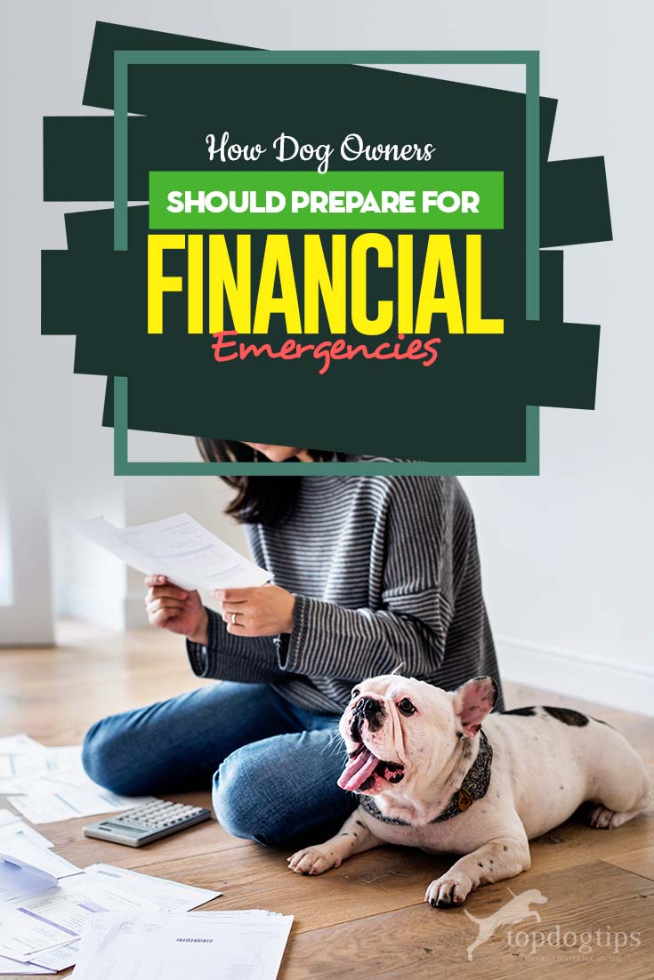 How Dog Owners Should Prepare for Financial Emergencies - The Guide