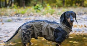 Raincoats for Dogs - What to Consider When Shopping