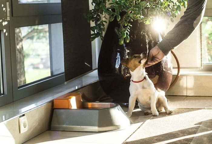 Smart Pet Water Bowls - Woofbowl
