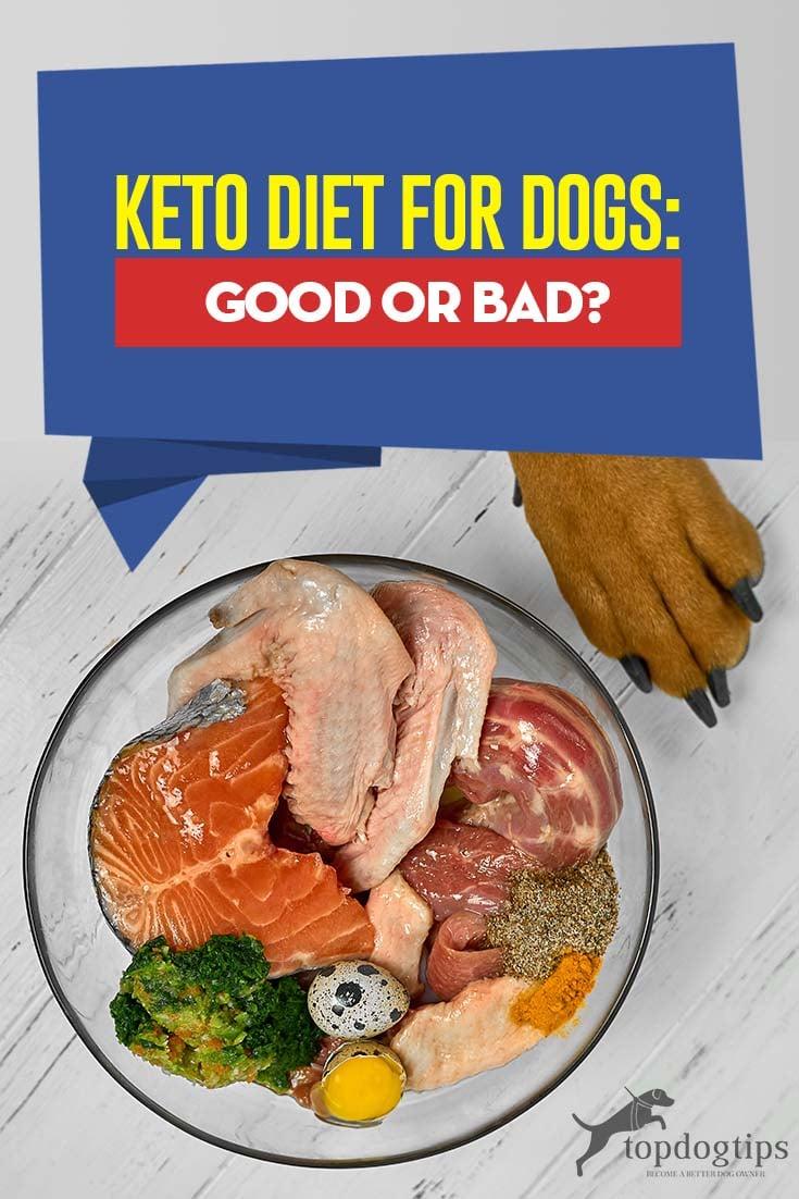 keto pet diet is bad
