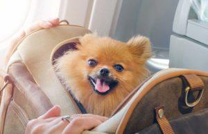 Top 5 Best Airline Approved Dog Carrier Brands