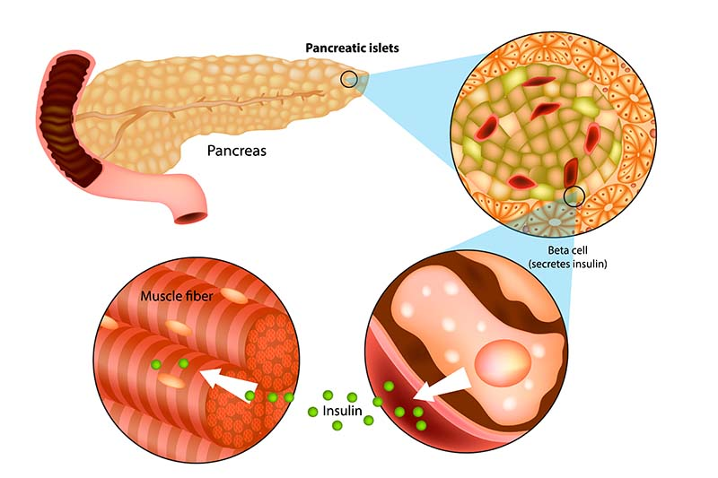 What is pancreas in dogs