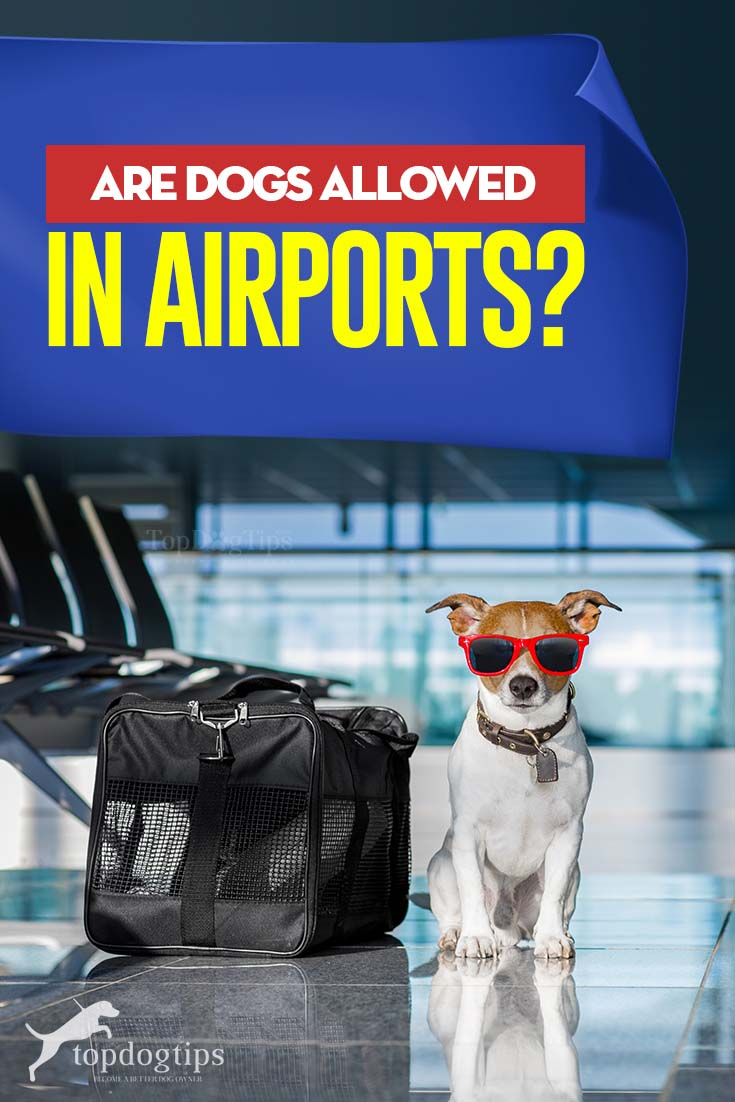 Are Dogs Allowed in Airports With Tips for Air Travel
