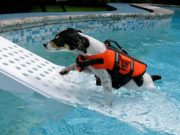 Best Dog Pool Ramp Brands