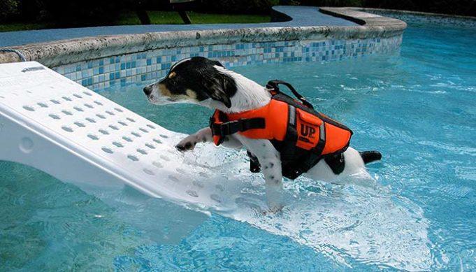 Best Dog Pool Ramp Brands