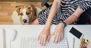 Making Money as a Pet Blogger