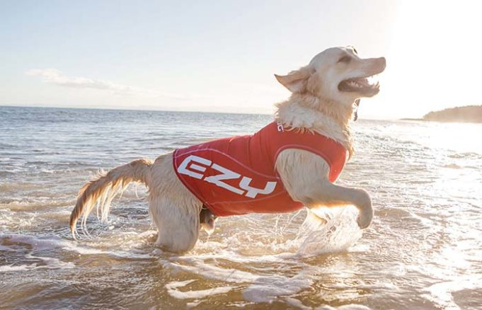 The Best Sun Protection Clothing for Dogs