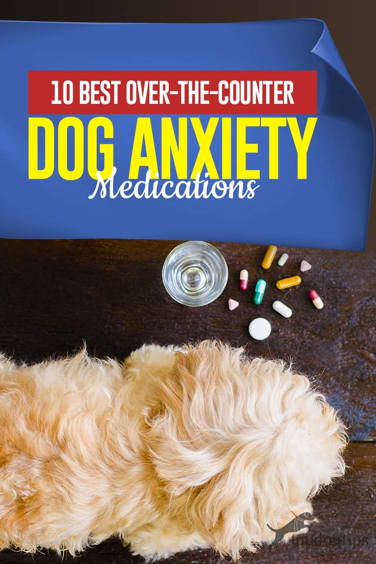The 10 Best Dog Anxiety Medication Over the Counter and ...