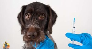 What is Over Vaccination in Dogs and How to Prevent It