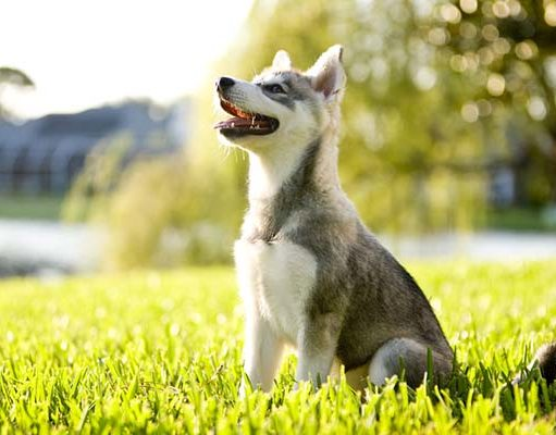 What is Sniffspot and How It Helps to Mentally Stimulate Dogs