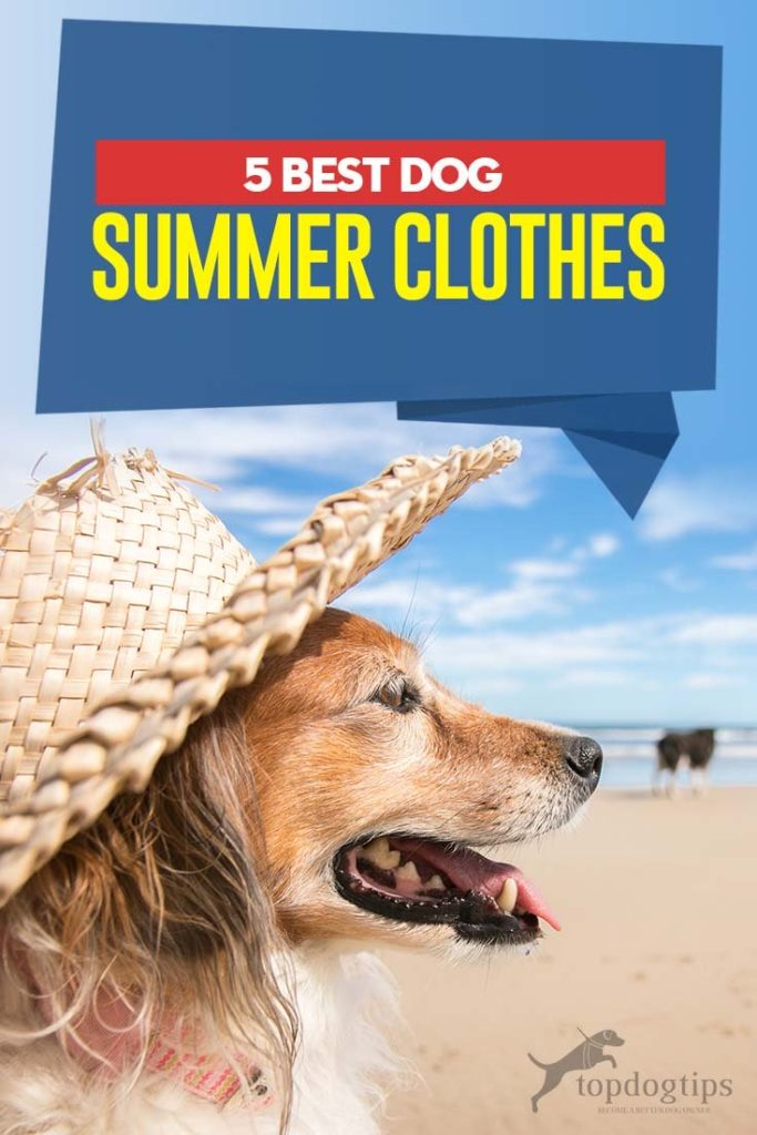 5 Top Rated Best Dog Summer Clothes