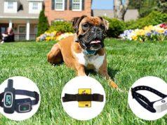Best Citronella Dog Collar