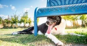 Best Dog Breeds for Hot Weather