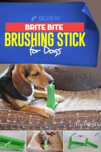 Review - Brite Bite Brushing Stick for Dogs