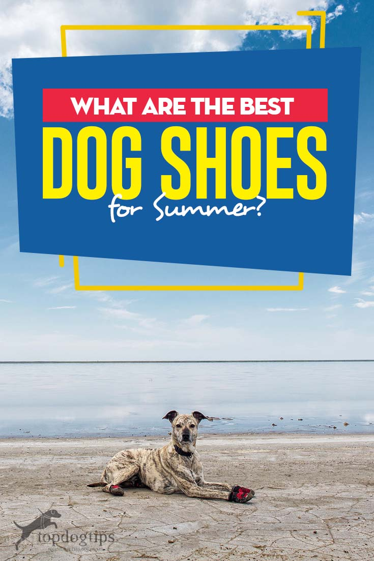 The 5 Best Dog Shoes for Summer