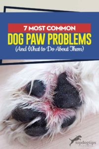 The 7 Most Common Dog Paw Problems and What to Do About Them