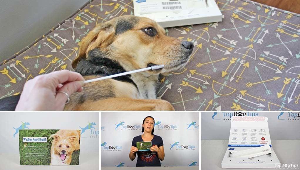 The Best Dog DNA Tests 2020