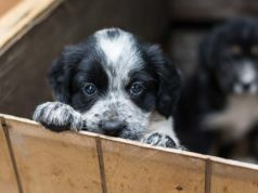 What Are the Responsibilities of Dog Foster Parents