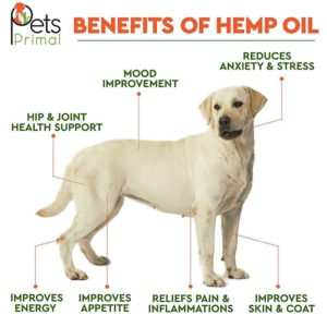 benefits of hemp oil for dogs
