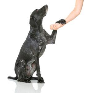 dog shaking paw