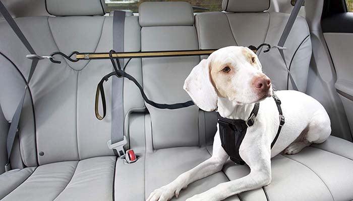 diy truck bed dog tether