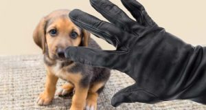 Dog Stealing - How It Works and How to Protect Your Pets