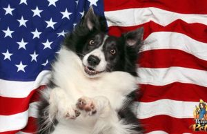 How to Keep Dogs Safe on 4th of July