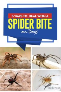 The 5 Ways to Deal With a Spider Bite on a Dog