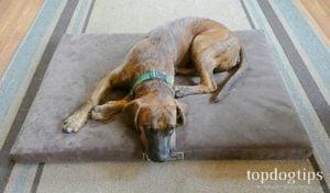 Woofmat Orthopedic Dog Bed