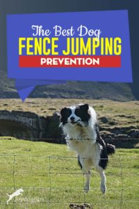 5 Best Dog Fence Jumping Prevention