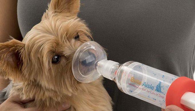 5 Best Dog Oxygen Masks and Inhalers