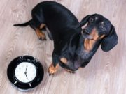 Dog Feeding Schedule - What Owner's Must Know