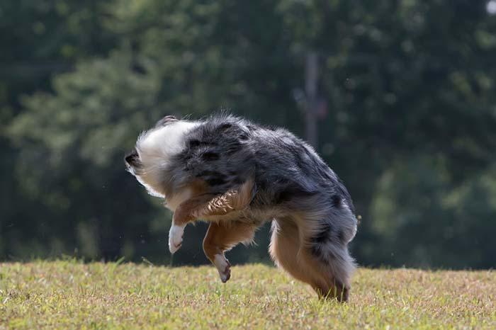Spin Around dog trick