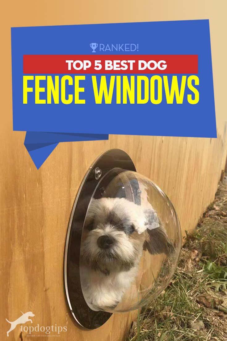 The 5 Best Dog Fence Windows