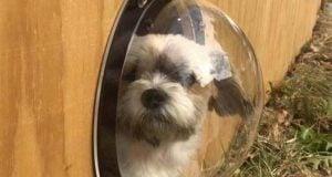 Top 5 Best Dog Fence Windows