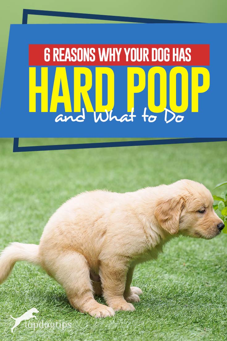 Top 6 Reasons Why Your Dog Has Hard Poop and What to Do