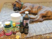 home remedies for dogs to have at home