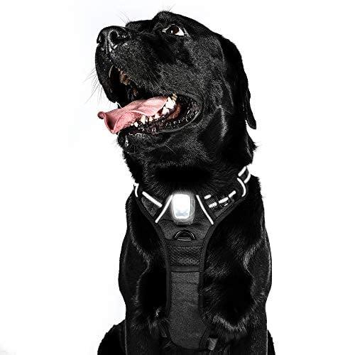 Rabbitgoo Light-Up Dog Harness Giveaway