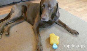BARK Dog Toys