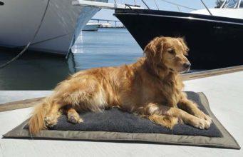 Best Dog Air Mattress Options for Sleeping Under the Stars
