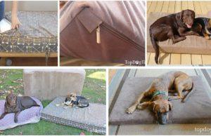 Best Dog Mattress Beds