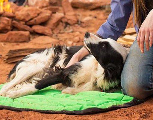 Best Travel Dog Bed Options