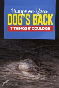 Bumps on a Dog's Back Guide - 7 Things It Could Be and What To Do