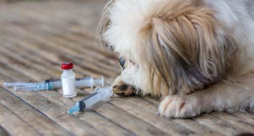 Rabies dog bite bacteria