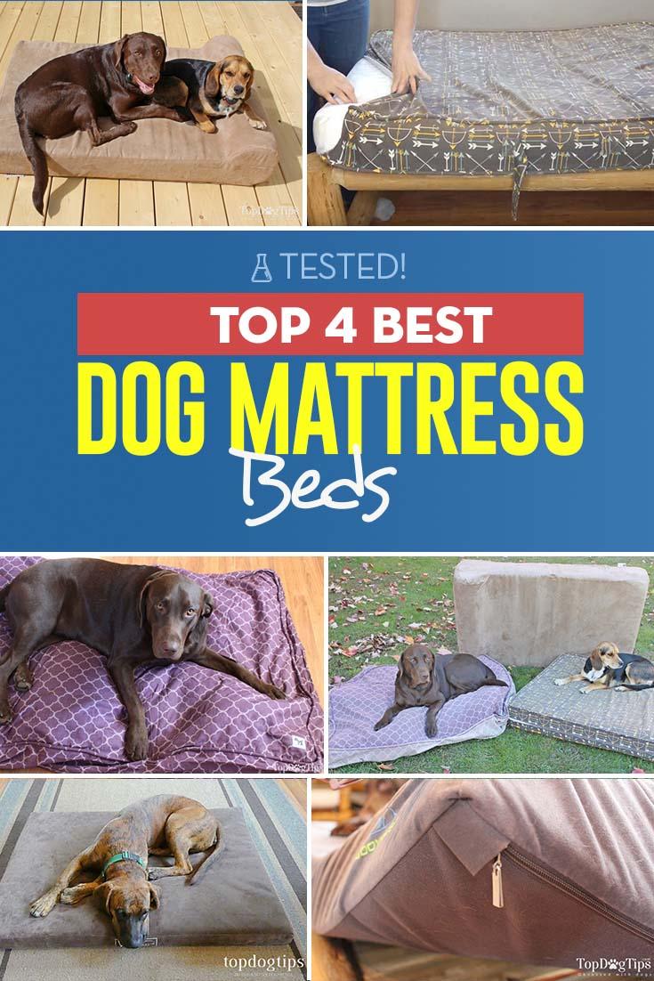 The 4 Best Dog Mattress Beds
