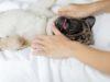 The Best Dog Massage Videos