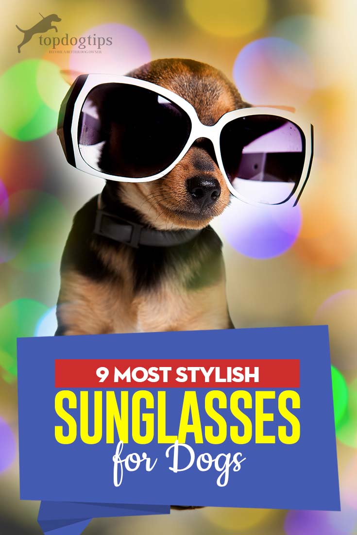 Top 9 Most Stylish Sunglasses for Dogs to Try Right Now
