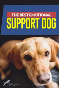 Top Best Emotional Support Dogs
