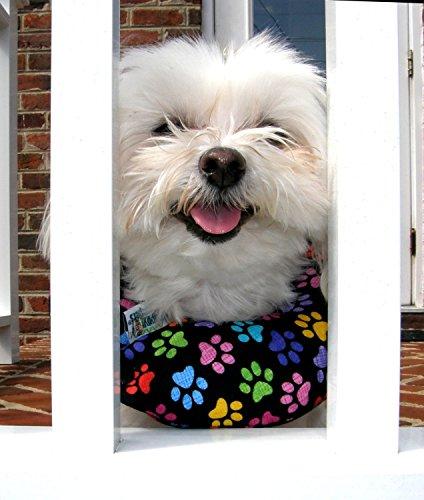 Puppy bumper