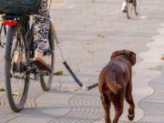 Best Dog Bike Attachment Choices
